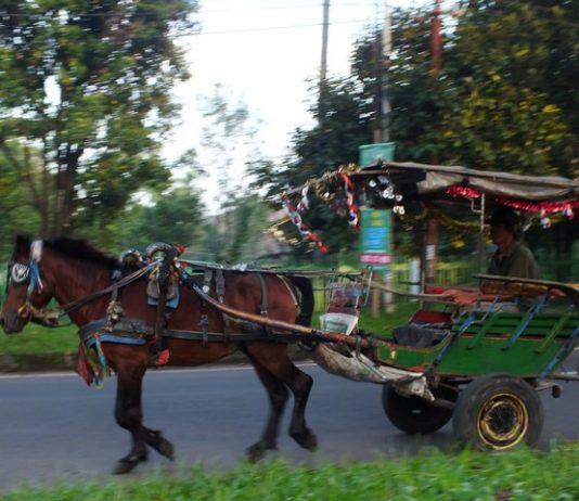 Delman - Indonesia traditional horse cart